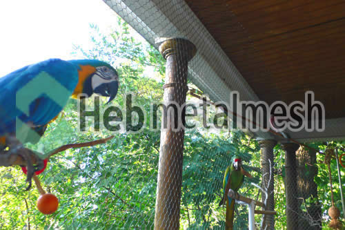 macaw exhibit mesh
