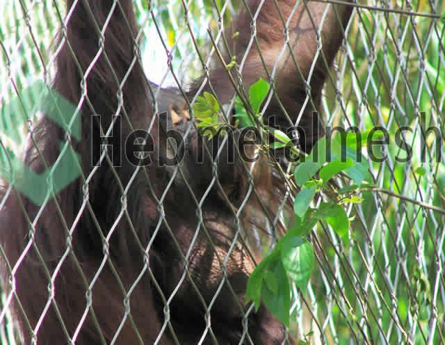 gibbon_enclosure_mesh