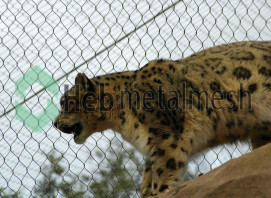 leopard enclosure fence