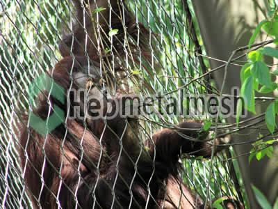 zoo mesh for chimpanzee exhibit, chimpanzee cages mesh, chimpanzee fencing wholesaler