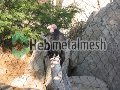eagle protection fence, eagle enclosures netting, eagle exhibit control mesh specificatons