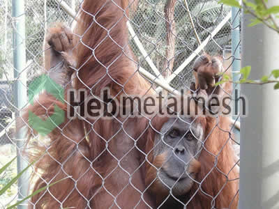 Factory supplies for gibbon exhibit fencing mesh, gibbon enclosures mesh
