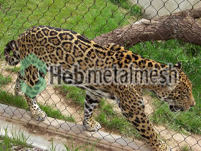 zoo enclosures for leopard exhibit, leopard protection netting, leopard barrier netting for sale