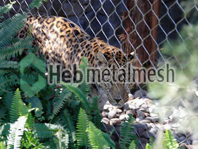 wire mesh for leopard cage mesh, leopard perimeter netting, leopard roof netting supplies