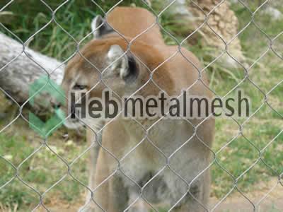 lion exhibit design, zoo lion enclosures plans, zoo lion mesh supplies