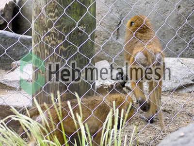 zoo enclosures for monkey exhibit, monkey protection netting, monkey barrier netting for sale