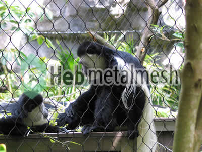 monkey cover mesh, monkey fencing, monkey safety netting for sale
